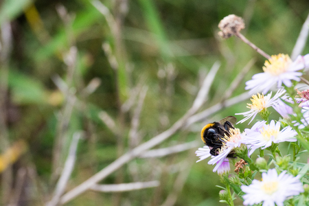 bee on flower: Nice wildflowers and grass on meadow. Bumblebee is sitting on flower. Soft light, shallow depth of field, selective focus.