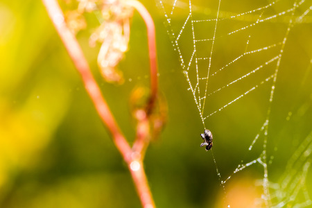 Dead small bug caught in spider web. Macro photography, close-up shot with shallow depth of field. Stock Photo