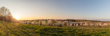 Panoramic photo of a small village at sunset. Blooming white trees on meadow in foreground, houses in background. Spring warm colors.