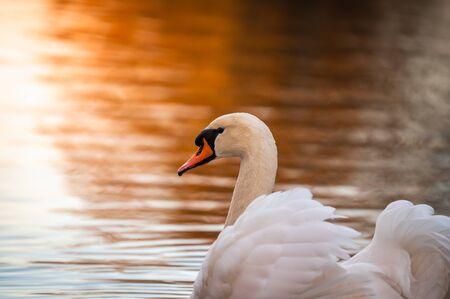 LabuÅ¥ plavající pryč. V pozadí je krásné zlaté svÄ›tlo od západu slunce. Reklamní fotografie