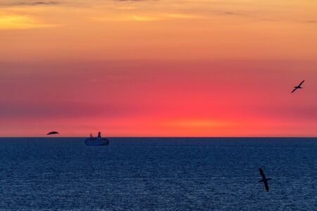 Silhouette of a large ocean liner sailing on the sea on the horizon after sunset. Seagulls fly in the sky. Reklamní fotografie