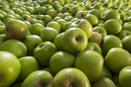 Pile of green apples forming a background. Sharpness in front of the picture