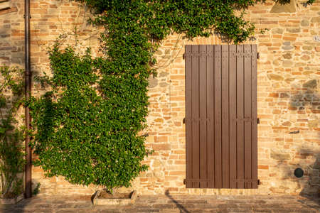 brick wall with copy space framed by Ivy