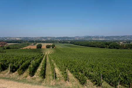 Panoramic view of scenic Tuscany landscape with vineyard in the Chianti region, Tuscany, Italy.