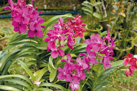Lilac flowers 스톡 콘텐츠