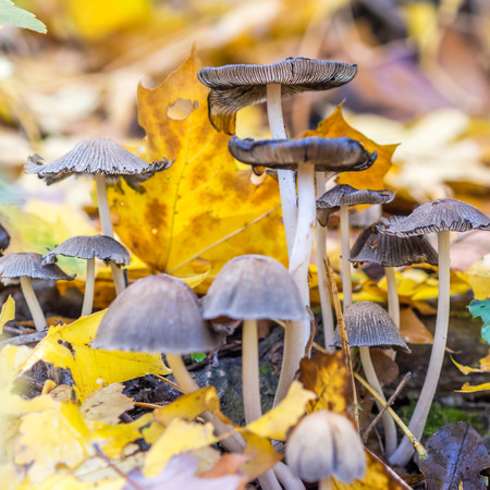 uneatable: uneatable mushrooms in forest