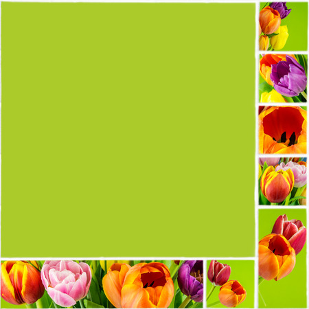 collage of tulips on green background on white ceramic mosaic tile natural style center of this collage can be used for text photo