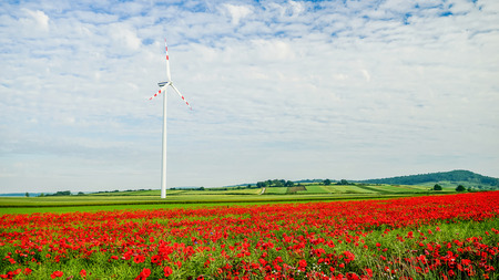 red poppy filed with  windmill with sky background photo
