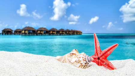tropical theme with maldives blurred background, star shell in the front on sandy beach