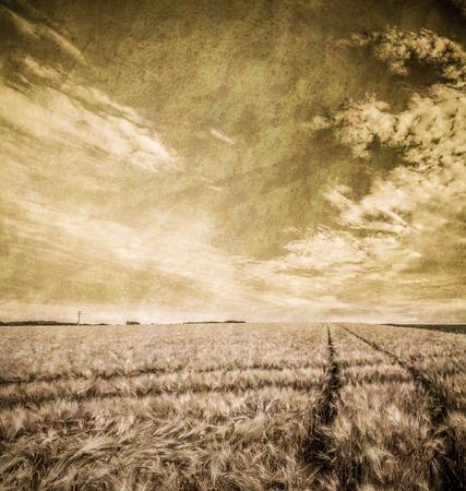 domination: paisaje con campo weath y cielo nublado en el estilo grunge con los colores verde y amarillo dominaci�n Foto de archivo