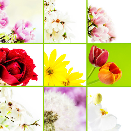 magnolia soulangeana: collage of various flowers on white background with green separation lines Stock Photo