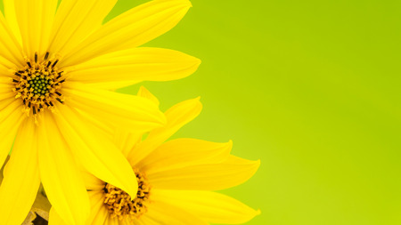 Yellow flower with thin petals on light green background stock photo stock photo yellow flower with thin petals on light green background mightylinksfo