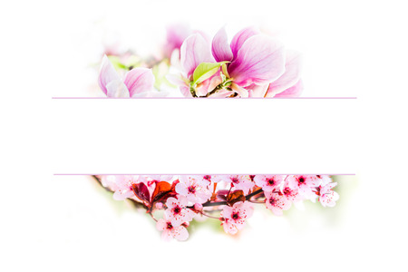 greeting card made of blossoming pink magnolias and pink cherry tree flowers with pink border frame on white background