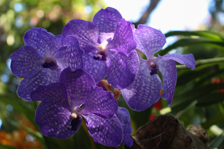 Orchid flower photo