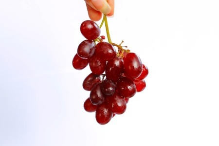 Hand holding grapes