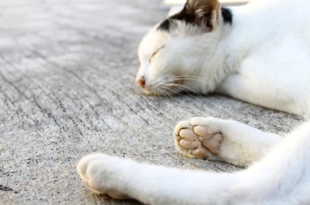 sleeping pad: Cat as sleep at concrete Stock Photo