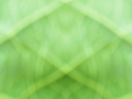 abstract blur green