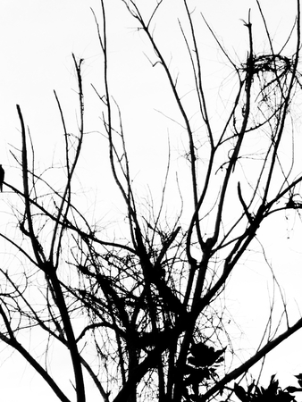 Tree branches on the white background
