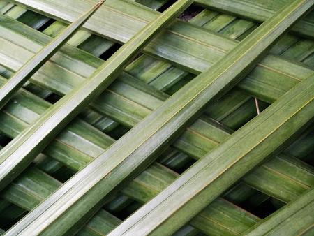 Nypa palm leaf texture