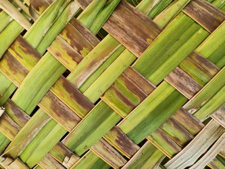 striped of palm leaf abstract green and brown texture background Banco de Imagens
