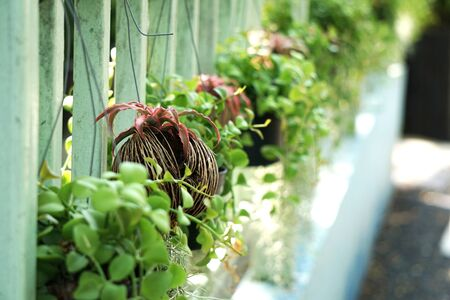 Ornamental plants for hanging on the room wall