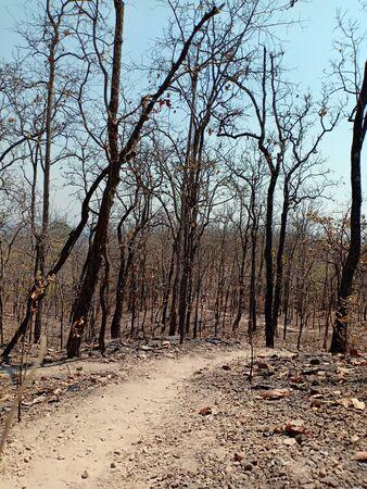 Arid trees in the dry season
