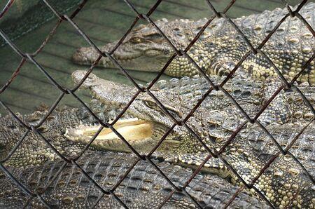 Decorative wire mesh of dangerous animal background Standard-Bild