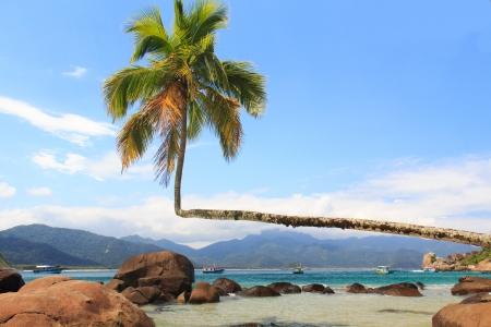 Palm tree on beach Aventueiro, Ilha Grande, Brazil