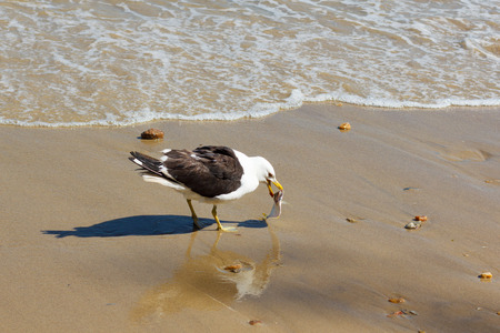Seagull eating fish on beach near water. Selective focus photo