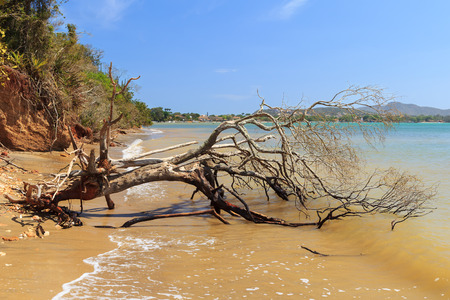 the flood tide: Dead broken tree in sea after storm, hurricane. Selective focus on tree