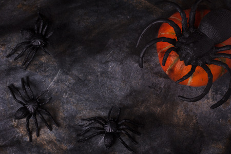 grey background: Spider and pumpkin on web with black and grey background and copy space for Halloween. Selective focus Stock Photo