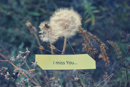 i miss you: Paper note I Miss You, white dandelions and dry autumn grass in soft colors