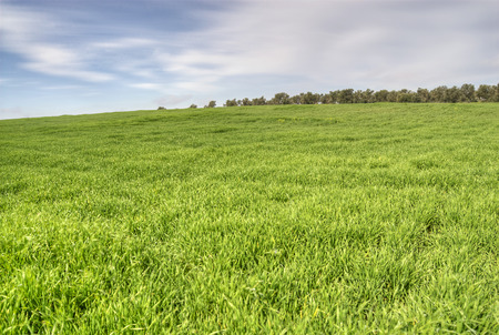 Landscape of green grass with blue sky and clouds photo
