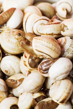 reloaded: Detail of Bowl of snails in garlic, typical plate of Spain and France Stock Photo