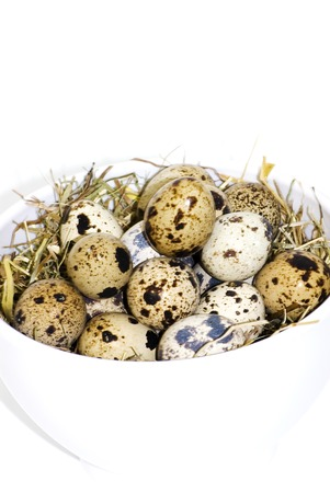 medium size: A lot of quail eggs - Stock Image