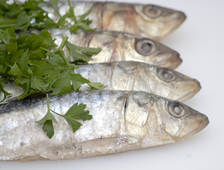 Fresh sardines with parsley leaves on white