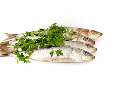 Fresh sardines with parsley leaves on white background