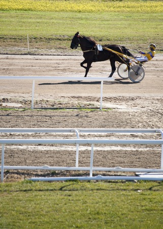 trotters: Horse Racing cars called Trotters