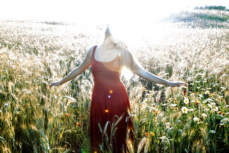 Beautiful blond woman in a wheat field at sunset  backlit photo