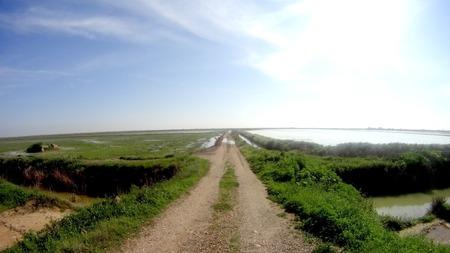 desolate: Landscape of a desolate road at dawn