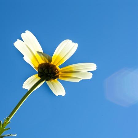 Field of wonderful daisy flowers