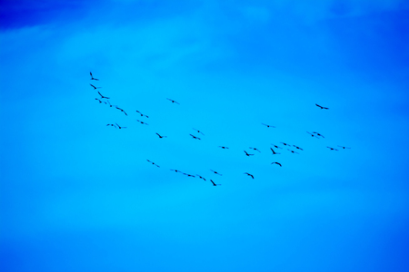 Flocks of birds over blue sky