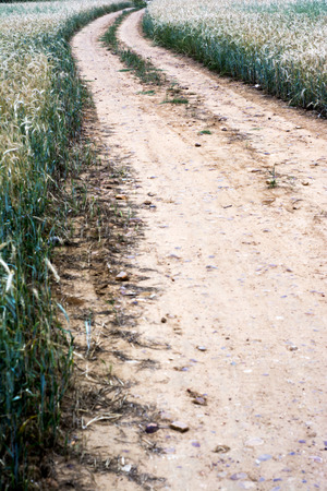 Dirty road in a wheat field