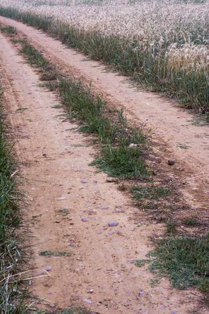 Dirty road in a wheat field