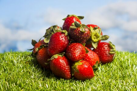 Red strawberries on green grass with blue sky background Standard-Bild