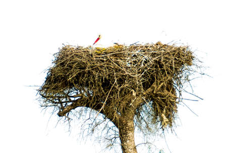 Stork in its nest on a bright spring morning