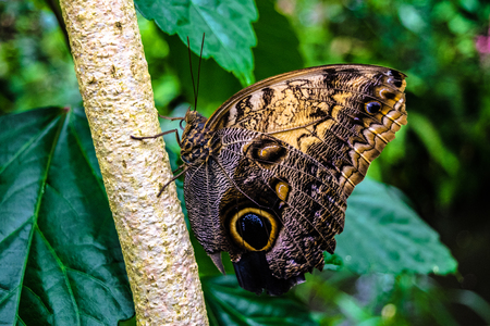 Butterfly in Colorado Stock Photo
