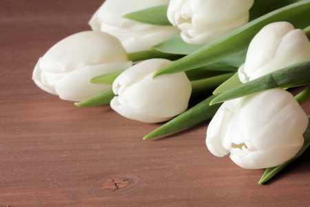 white tulips Stock Photo - 39288140