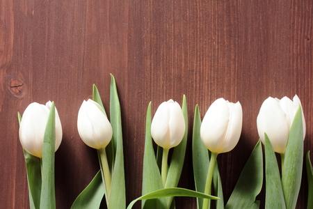White tulips Stock Photo - 39288177