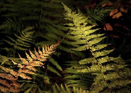 Artistic ferns